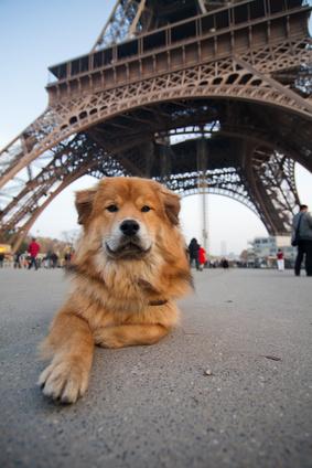 Elo liegt vor dem Eiffelturm